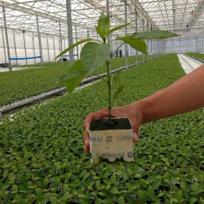 vallealto semillero 02