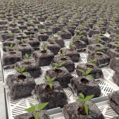 vallealto semillero
